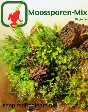 Berühmt Moossporen Mix 10 Gramm - Redfrogteam #UC_33