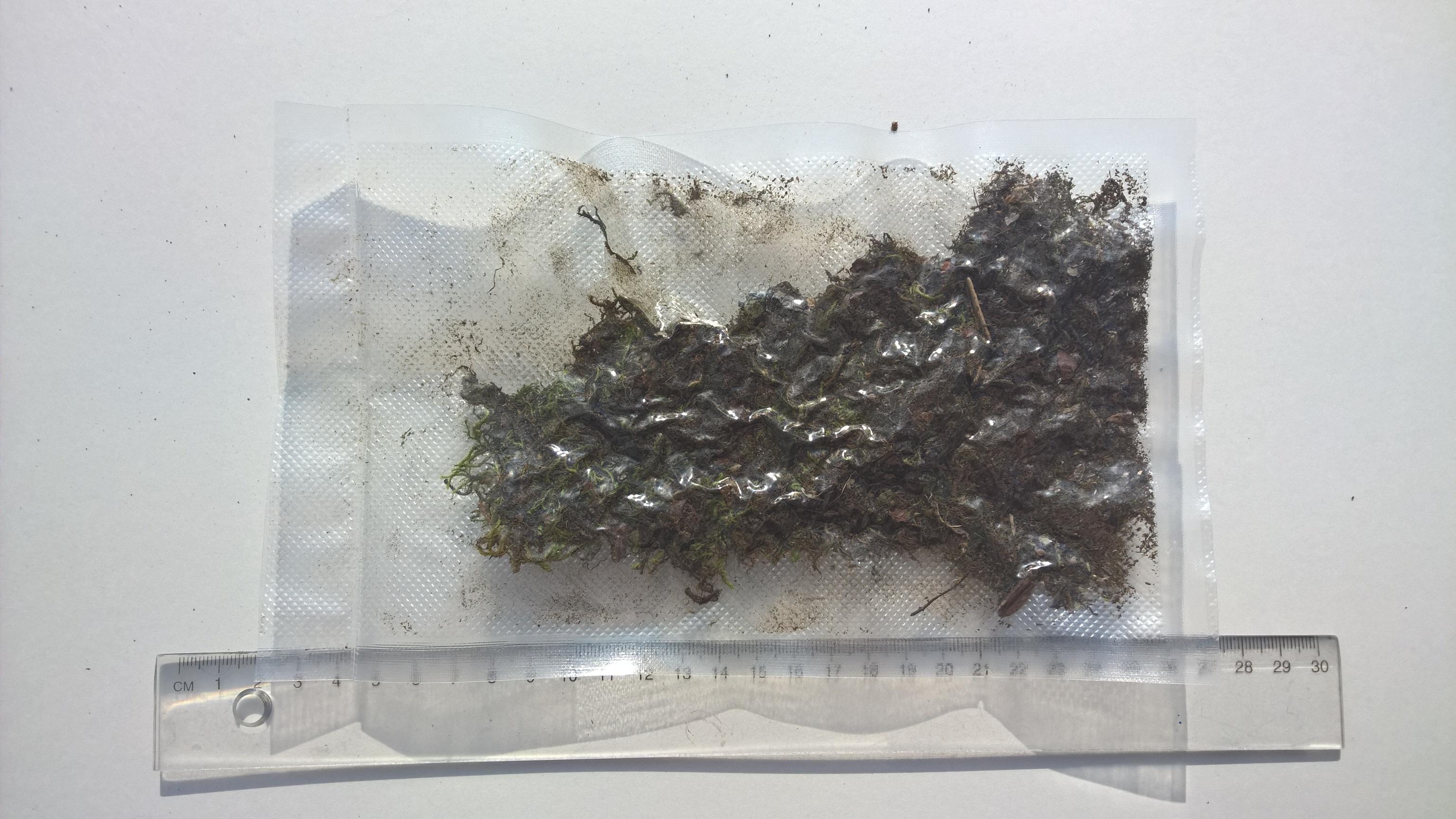 Atemberaubend Moossporen Mix 10 Gramm - Redfrogteam @FD_79